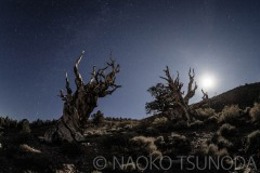 Nightscape 4