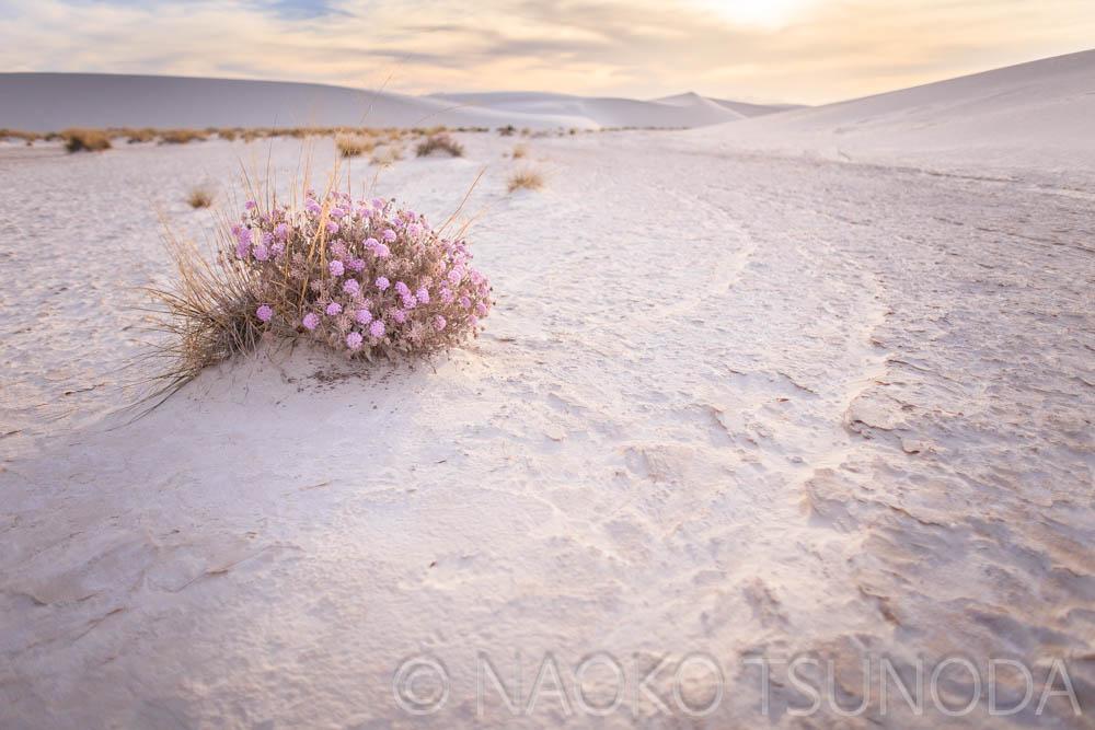 White Sands 7
