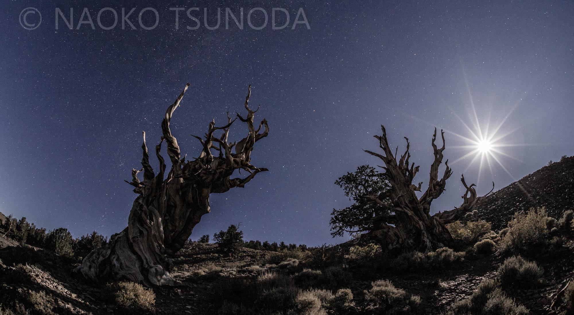 Naoko Tsunoda Photography