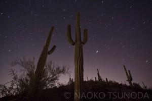 Saguaro 1